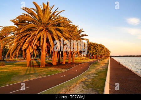 Late evening sun strikes palm trees alongside Riverside Drive beside Perth Water, a section of the Swan River, Perth, Australia - Stock Image