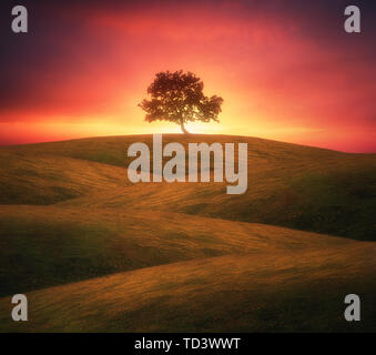 lonely tree on rolling hills with dreamy light - Stock Image