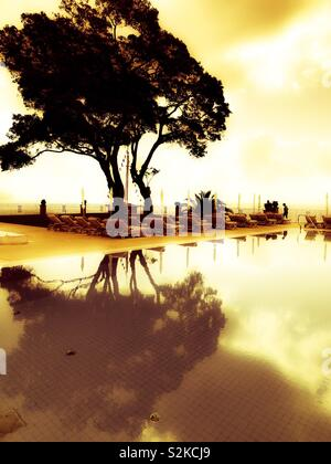 Tree silhouette reflected in swimming pool - Stock Image