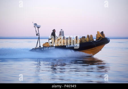 People on a speeding zodiac on a whale watching trip on the St Lawrence off Tadoussac, Quebec - Stock Image