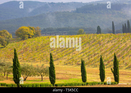 Countryside, cypress trees  and wine vineyard near Siena in Tuscany,Italy. - Stock Image