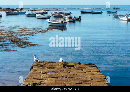 Seagulls in the pier of harbour in Brittany with blurred boats on background and space for copy. Point of Penmaech, Finistere, Brittany, France - Stock Image