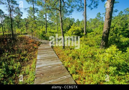 Boardwalk on Fly Trap Trail at Carolina Beach State Park, south of Wilmington, North Carolina, AGPix_0637 - Stock Image