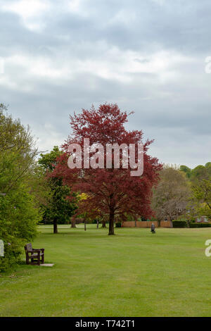 A woman walking in a park in Salisbury, Wiltshire,  England - Stock Image
