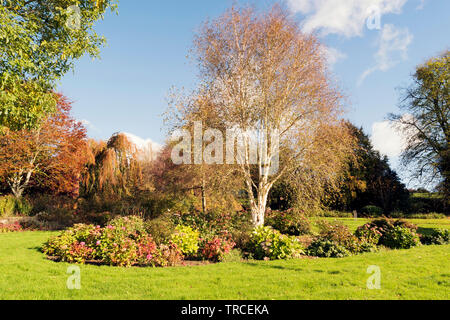 Seasonal image of a colorful garden in the autumn . - Stock Image