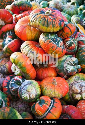 Assortment of colorful farm pumpkins - Stock Image