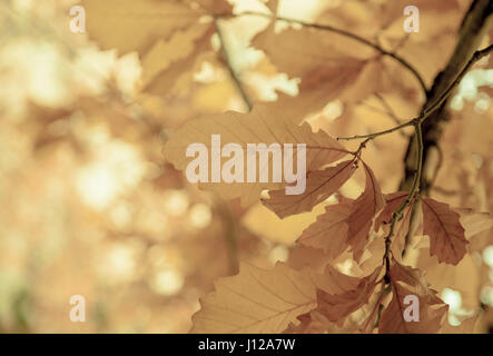 Leaves on a sunny morning, Fall season - Stock Image