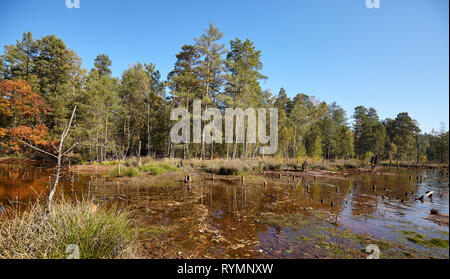Autumnal landscape with drying lake in a forest. - Stock Image