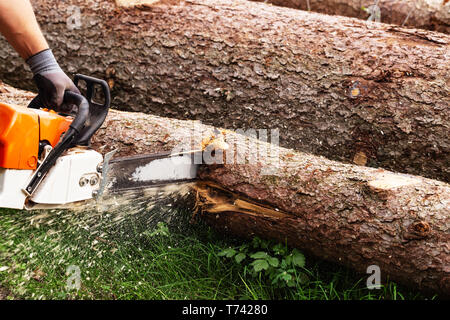 Strong man is cutting a tree with a chainsaw - Stock Image