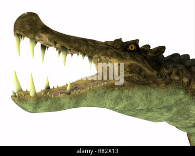 Kaprosuchus Reptile Head - Kaprosuchus was a carnivorous crocodile that lived in Niger, Africa during the Cretaceous Period. - Stock Image