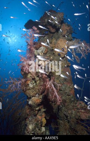 reef fish on wreck at Truk Lagoon - Stock Image