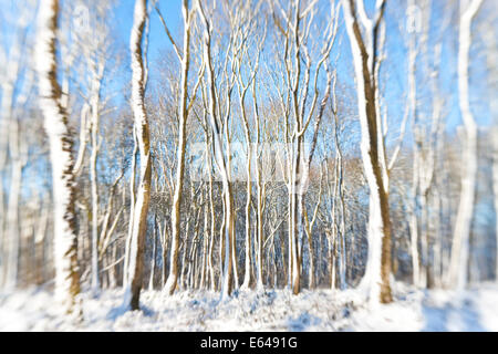 Snow covered trees, nr Chipping Sodbury, South Gloucestershire, UK - Stock Image