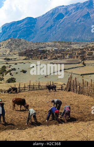 Phot Nepal People Working Hard Terrace Mountains Village. Vertical Photo - Stock Image