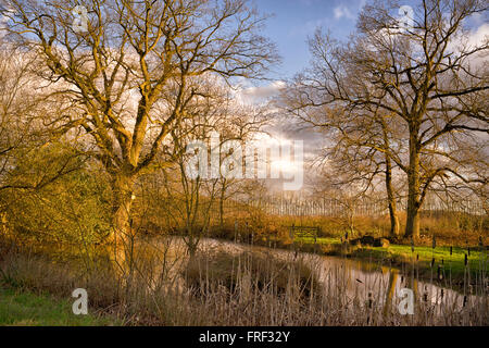 Farm pond by public footpath in the Chilterns, Buckinghamshire, England, UK - Stock Image