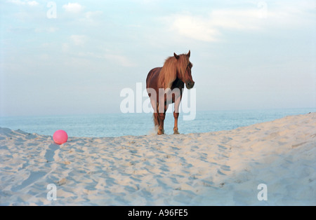 Horse and ocean - Stock Image