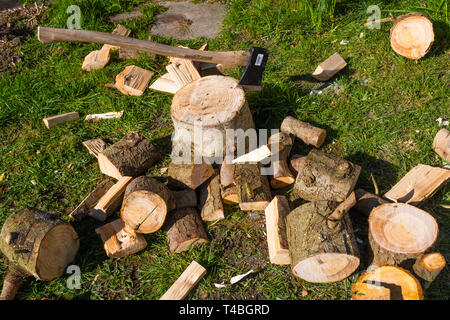 Sustainable energy in the UK: Softwood logs outside a cottage in west wales, ready to be chopped up for firewood for a wood burning stove. - Stock Image