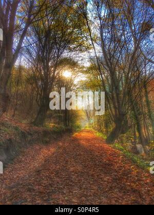 Autumn dream - Stock Image