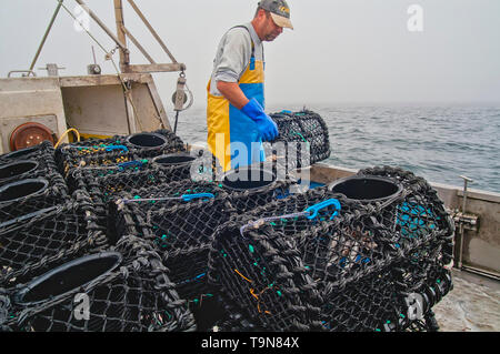 Freshly baited pots stacked and ready to be returned to the sea bed.(Sequence 1/3). - Stock Image