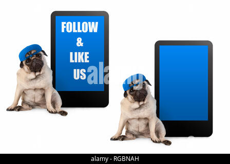 cute pug puppy dog looking smart, sitting next to tablet phone with text follow and like us, wearing blue cap, isolated on white - Stock Image