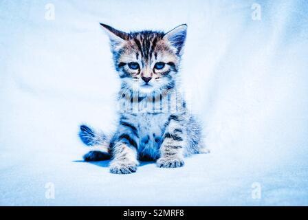 Kitten - Stock Image