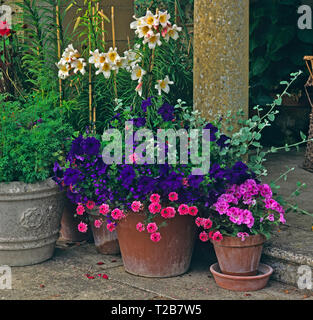 A stone terrace with colouful planted containers of Lillies, Geraniums and Petunia - Stock Image