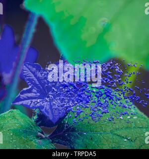 Digitally enhanced image of a cucumber blossom close-up - Stock Image