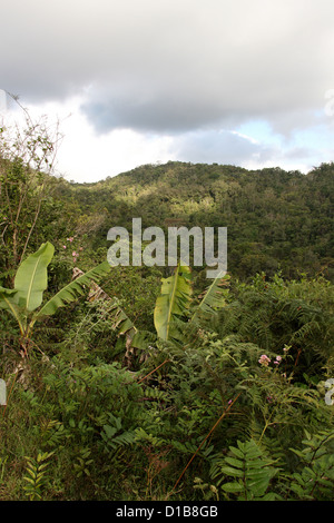 Tropical Rainforest, Ranomafana National Park, Madagascar, Africa. - Stock Image