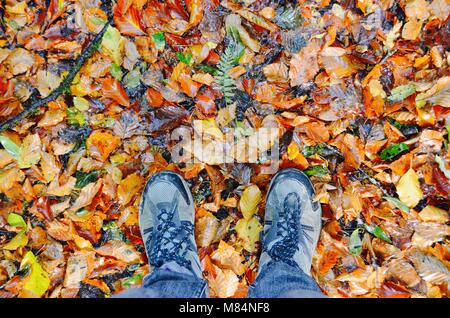 Autumn leaves exploding with colour - Stock Image