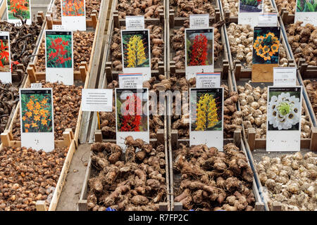 Flower bulbs for sale at Amsterdam flower market, Amsterdam, Netherlands - Stock Image