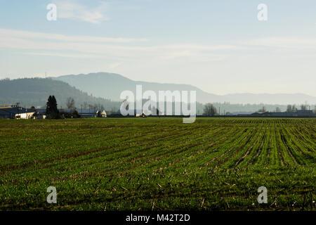 Farm in Matsqui, British Columbia - Stock Image