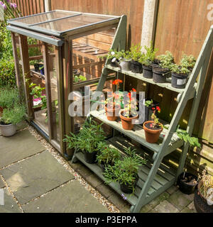 Gabriel Ash upright coldframe greenhouse and plant staging display stand / theatre on small domestic garden terrace - Stock Image