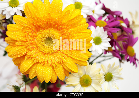 Close up image of various flowers - Stock Image