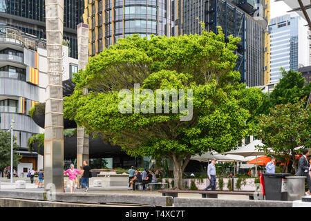 A tree near Darling Harbour Wharf 1, King Street Wharf, Sydney, New South Wales, Australia. - Stock Image