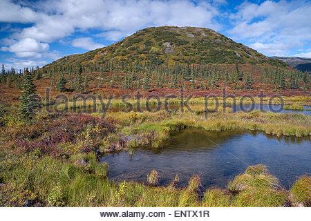 Small pond near Wonder Lake in Denali national park Alaska - Stock Image