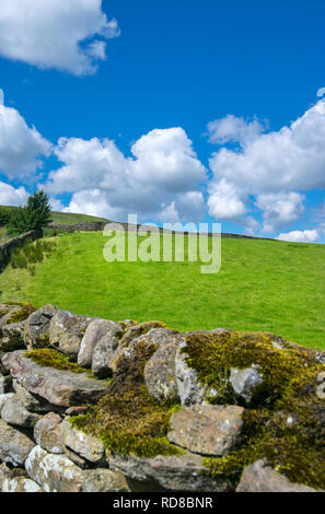 Green fields in Wensleydale in the Yorkshire Dales, England, UK - Stock Image