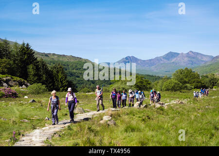 Large group of Ramblers hiking on a stone footpath in Snowdonia National Park with Snowdon horseshoe as backdrop. Capel Curig, Conwy, North Wales, UK, - Stock Image