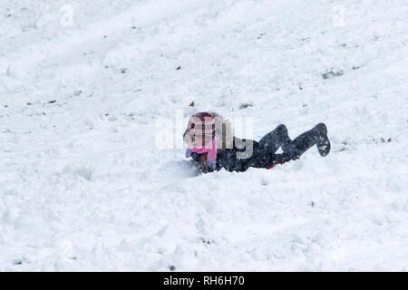Chippenham, Wiltshire, UK. 1st February, 2019. A young girl enjoying the heavy snow is pictured in a local park in Chippenham as she speeds down a hill on a sledge. Credit: Lynchpics/Alamy Live News - Stock Image
