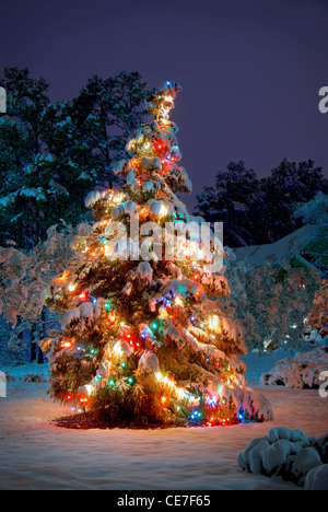 Snow covered Christmas tree with colorful lights - Stock Image