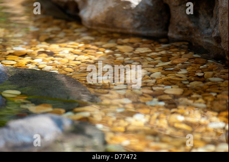 Macro Tropical Scene - Stock Image