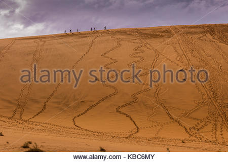 Walking in the Deadvlie are of Namibia - Stock Image