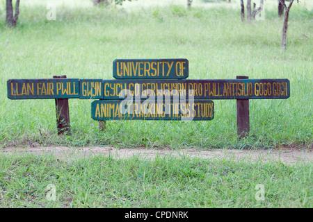 UNIVERSITY OF llanfairpwllgwyngyllgogerychwyrndrobwllllantysiliogogogoch sign Mikumi national park AT RESEARCH .Tanzania - Stock Image