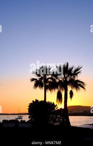 Two palm trees are silhouetted against the skyline as the sun sets over Playa Blanca in the south of Lanzarote. One of the Spanish canary Islands - Stock Image