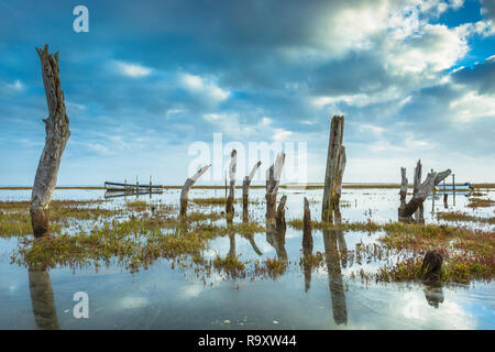 View of Thornham Stumps at hight tide. - Stock Image