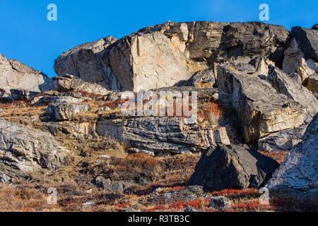 Greenland. Scoresby Sund. Gasefjord. Gasegletscher. Rocks and arctic flora. - Stock Image