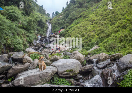 A view up Bhagsu waterfall with a dog sitting in the foreground in Himachal Pradesh, India - Stock Image