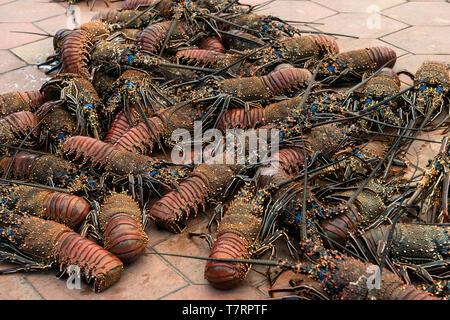 Fresh Lobster catch at fish market in Puerto Ayora, Santa Cruz Island, Galapagos Islands, Ecuador - Stock Image