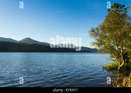 Coniston water as evening shadows begin to form amid the trees below Coniston Fells with the Old Man of Coniston rising to its 803 metre (2,634 feet)  - Stock Image