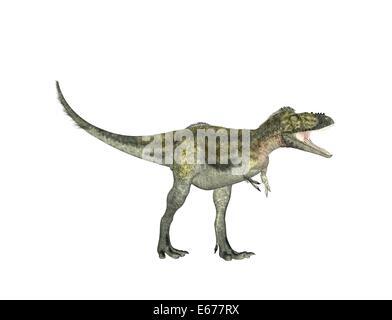 Dinosaurier Alioramus / dinosaur Alioramus - Stock Image