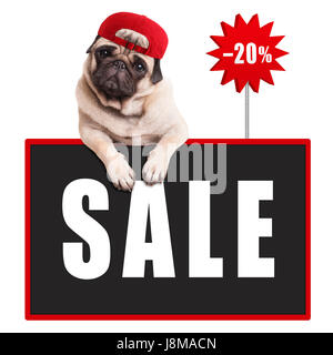 cute pug puppy dog wearing red cap, hanging with paws on blackboard sign with text sale and 20 percent off, isolated - Stock Image