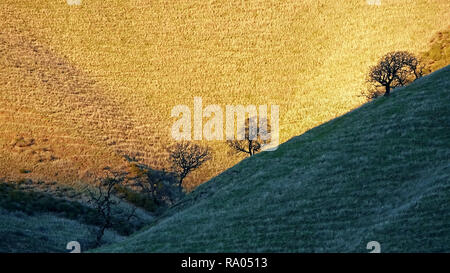 Grassy hills in sunlight and shade with silhouetted bare trees. - Stock Image